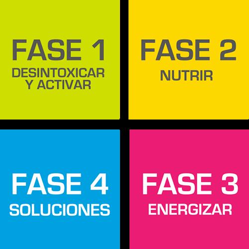4 fases teoma